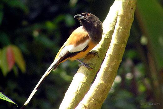 Kerala Birds Name And Photos