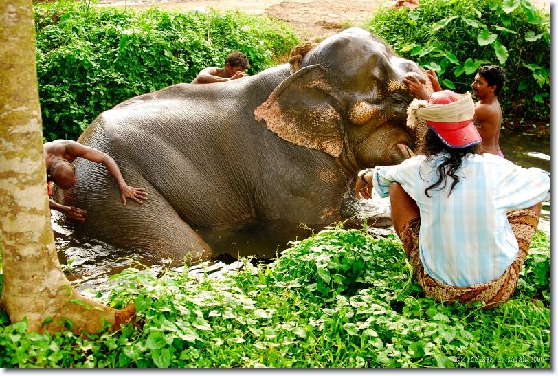 elephant bathing in kerala
