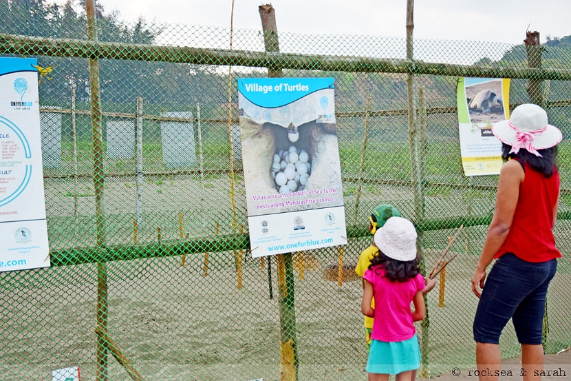 Fencing for the Olive Ridley turtle nests at Velas, Maharashtra