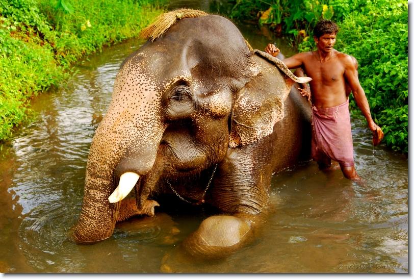 time for an elephant bath – RockSea and Sarah